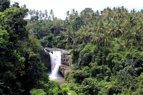 Las tropikalny jest doskonale rozwinięty.