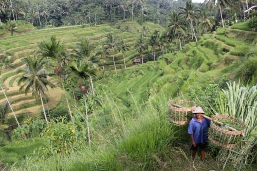 Tarasy ryżowe są symbolem tego regionu.